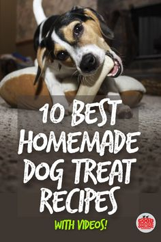 Homemade dog treat recipes are the best because you know exactly what your dog is eating. Check out the 10 best DIY dog treat recipes we found online with how to videos to help with each one. Puppy Treats, Diy Dog Treats, Homemade Dog Treats, Dog Treat Recipes, Homemade Food, Make Dog Food, Pet Food, Puppy Food, Food Food