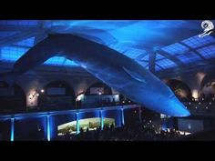 RAW FOR THE OCEANS / G-Star - Cannes Lions 2014 Winners - YouTube