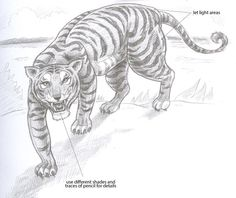 82 Best Tigers Drawing And Painting Tigers Images Tiger Drawing