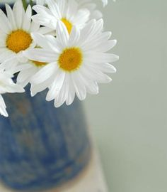 """""""don't you think daisies are the frendliest flower?"""" :) #namethatquote Hint: #NoraEphron ❤"""