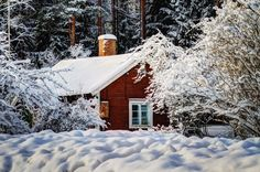 Winter in the forest by Alexander Arntsen on 500px
