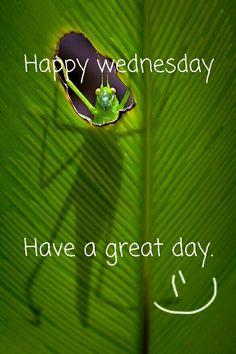 สุขใจ...วันพุธ Wednesday Greetings, Wednesday Wishes, Good Morning Wednesday, Good Morning Good Night, Happy Wednesday, Morning Messages, Morning Greeting, Days Of Week, Qoutes