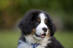 Study Suggests Puppies Love Baby Talk, Oh Yes They Do | The Huffington Post