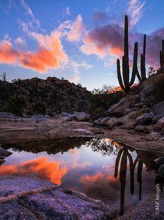suculentas y cactus de baja california norte - Buscar con Google