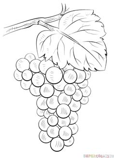 How to draw Grapes step by step. Drawing tutorials for kids and beginners.