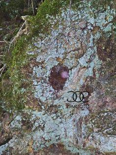 Baumhöhle, Bäume, FOTO von GIMOOTO, Motiv gedruckt auf Satin Canvas Leinwand