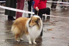 Tutti in mostra (con pedigree al seguito) | Me and my furry friends  http://meandmyfurryfriends.wordpress.com/2013/04/28/tutti-in-mostra-con-pedigree-al-seguito/