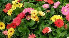 toko bunga surabaya, surabaya florist, toko bunga kayoon surabaya, bunga papan surabaya, standing flower surabaya, bunga buket surabaya, bunga plastik surabaya