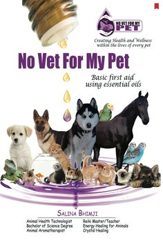 The new version of No Vet For My Pet www.novetformypet.com