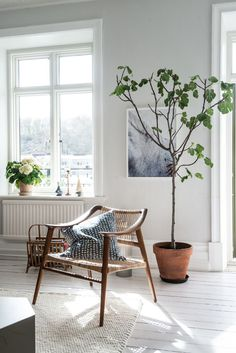 Living room, white floors and walls, tree, woven chair