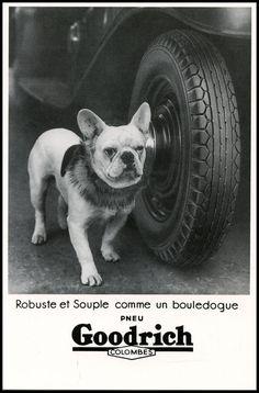 FRENCH BULLDOG FRENCHI BOULEDOGUE FRANCAIS BLACK & WHITE DOG PHOTO POSTCARD