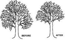 Techniques for #treepruning used by #arborist http://kerrywatson.jimdo.com/2012/10/25/techniques-for-tree-pruning-used-by-arborist/