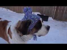 Niftynnifer's Crochet & Crafts: Free Crochet Pattern ~A Silly Hat For My Silly Dog
