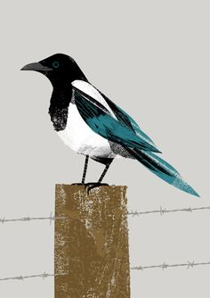Magpie by Chris Madden Illustration