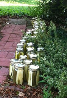 The Silcox Women of Rock Hall and Comegys Road made a walkway worth of pickles this past weekend!  I am serious jealous.  Photo is by KT, via her FaceBook page.