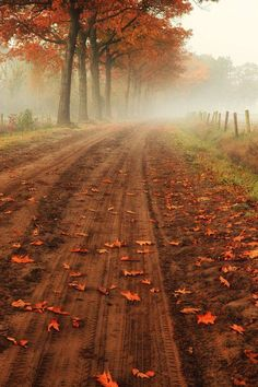 Out in the Country! Riding the Old dirt road in Belgium on a misty Autumn morning! morning 'A Country Road' by gigiembrechts Autumn Day, Autumn Leaves, Autumn Morning, Winter, Autumn Forest, Soft Autumn, Early Morning, Beautiful World, Beautiful Places