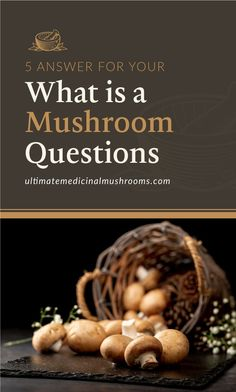 Medicinal mushrooms are extremely beneficial for our well-being though sometimes they are overlooked. And there are so much more to explore about these delightful fungi, we've only just scratched the surface. For starters, here are 5 answers to your What is Mushroom questions. | Discover more about medicinal mushrooms at ulitmatemedicinalmushrooms.com #medicinalmushroomsbenefits #healthymushrooms White Button Mushrooms, Mushroom Varieties, Poisonous Mushrooms, Nutrient Rich Foods, Serious Eats, Fungi, Starters, Stuffed Mushrooms, Surface