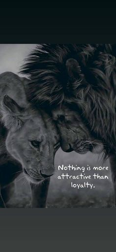 find most unique and ultra hd love quotes images for lover, girlfriend and boyfriend love quotes imges, love quotes in english for girlfriend English Love Quotes, Love Quotes With Images, Girlfriend And Boyfriend Love, Hd Love, Meaning Of Love, True Love, Girlfriends, Lion Sculpture, Positivity