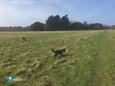 Gorgeous day today for dog walking in Dublin!  #sunnyireland #phoenixpark #dogwalking #dogs #olliespetcare