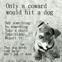 Please report animal cruelty Dog Quotes, Animal Quotes, Animal Cruelty Quotes, Animal Facts, I Love Dogs, Puppy Love, Animals And Pets, Cute Animals, Stop Animal Cruelty