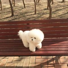 Cute Baby Animals, Animals And Pets, Funny Animals, Really Cute Puppies, Cute Dogs And Puppies, Doggies, Dog Suit, White Dogs, Cute Creatures