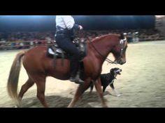 Nicolas Horse & Dog Trail
