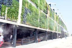 Vertical gardens at United States  of America Pavilion, Expo Milan 2015 #raiexpo #expo2015 #italy #milan #worldsfair #architecture #usa #pavilion