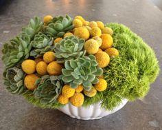 Succulent flower arrangement with billy balls.  http://www.parkerspetals.com/ or email me at jaime@parkerspetals.com
