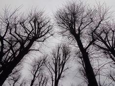 A winter day, Largo Moltebello