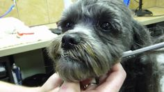 Doggie Clean Up Time Dog Spa, Dog Cleaning, Spa Day, Clean Up, Spas, Doggies, Window, Animals, Animales