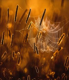 """Cobweb"" by Joni Niemelä - what an excellent photo!"