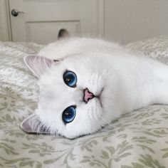 Cat has the most beautiful eyes ever - http://cutecatshq.com/cats/cat-has-the-most-beautiful-eyes-ever/