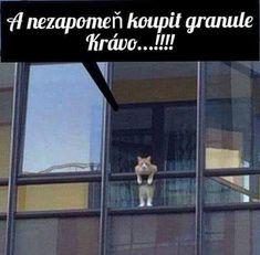 Memes, Humor, Dogs, Stickers, Facebook, Quotes, Fun, Animals, Gatos