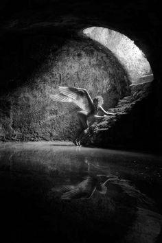 portal angel Dark