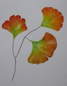 GINKGO LEAVES; watercolour pencils by Gorica Bulcock