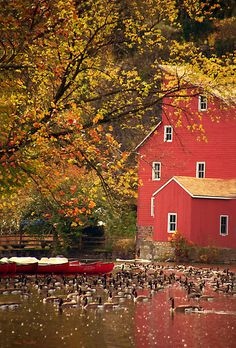 Autumn in the Country - Red Barn and Duck Pond Country Barns, Country Life, Country Fall, Country Charm, Country Homes, Country Living, Red Barns, Album Photo, Fall Halloween