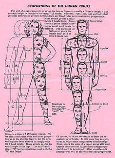 Human anatomy Drawing Lessons, Drawing Tips, Painting & Drawing, Art Lessons, Anatomy Drawing, Body Drawing, Human Anatomy, Drawing Proportions, Art Basics