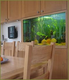 It would be so cool to have a beautiful tropical fish tank in a kitchen. Was watching My Kitchen Rules (Australia) tonight loved the tank in Peter & Gary's kitchen. Even better than this one ran full length of wall between lower and upper cabinets. Saltwater Fish Tanks, Tropical Fish Tanks, Aquarium Fish Tank, Wall Aquarium, Discus Aquarium, Nature Aquarium, Rimless Aquarium, Beautiful Tropical Fish, My Kitchen Rules