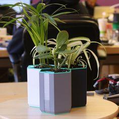 Cube Voronoi Pot Planter Flower Pot Planter Hand-Made Succulent Decoration 3D Printed 12 Colors