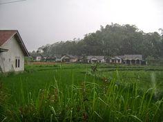Tanah Kavling Magelang, Jual Tanah Kavling, Jual Tanah di Magelang, Jual Tanah Di Magelang 2014, Jual Tanah di Magelang Kota