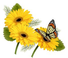 Yellow_Gerberas_with_Butterfly_PNG_Clipart.png