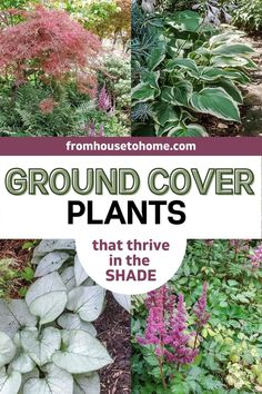 These beautiful compact perennials can be used as shade ground cover to add interest to your garden while helping to keep the weeds down. Here's an ultimate list of the best ground cover plants that thrive in the shade every gardener should know about. Partial Shade Perennials, Shade Flowers Perennial, Full Sun Perennials, Flowers Perennials, Shade Plants, Best Ground Cover Plants, Perennial Ground Cover, Perennial Bushes, Invasive Plants