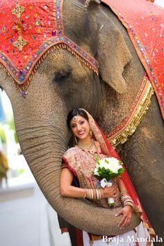 A portrait of the Indian wedding bride with the elephant. Indian Wedding Bride, India Wedding, Indian Bridal, Elefante Hindu, Namaste, Elephants Photos, Wedding Photo Gallery, Sari, India Colors