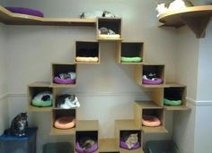 beautiful outdoor cat homes - Google Search