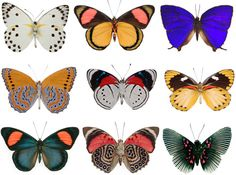 butterflies: beautiful colors and patterns