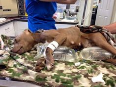 Afraid of pitbulls?  they should be more afraid of human beings.  Chained dog nearly froze to death in bitter North Carolina cold