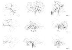 About a Prunus Pisardi  Architectural Design II - UNIT Arnuncio/Juárez  Winter 2011 - ETSAM School of Architecture