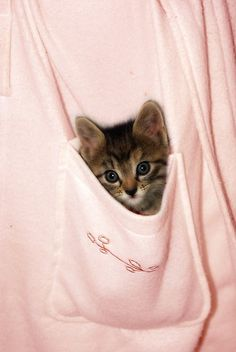 My mom brought my first kitten, Judy, home in her apron pocket. She looked a lot like this little girl.