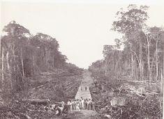 Derrubada de árvores para abrir caminhos as Linhas Telegráficas - 1913