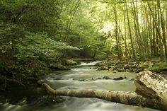 Bradley Fork - Great Smoky Mountains National Park by gatlinburg-cabins, via Flickr